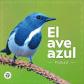 podcast-el-ave-azul